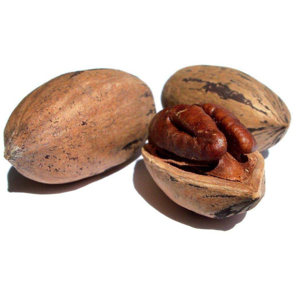 Пекан и грецкий орех отличия